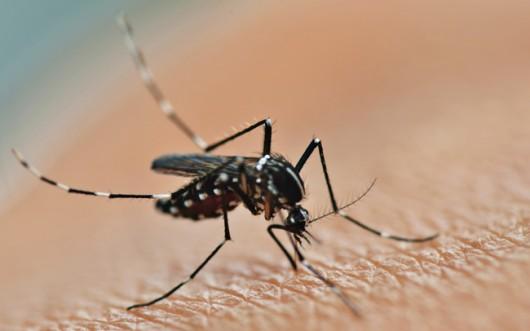 mosquito-dengue-cursos-cpt